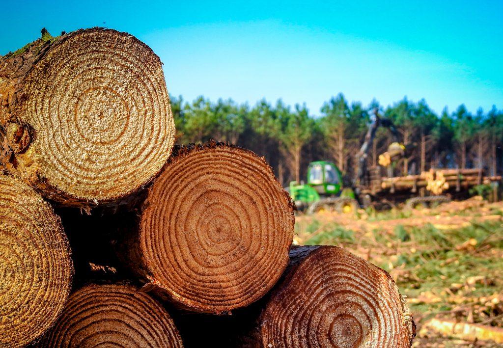 madeira malinovski