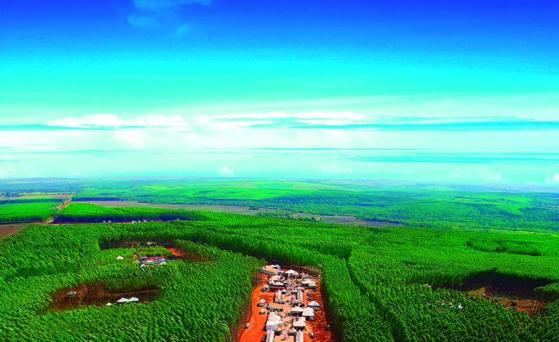 Imagem ExpoForest