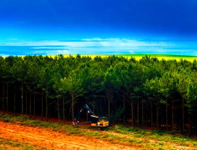 Curso de <br>Aperfeiçoamento Técnico <br>Para Gestores Operacionais Florestais