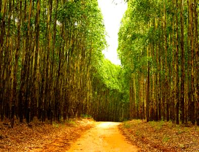 Curso de <br>Aperfeiçoamento Técnico <br>em Estradas de Uso Florestal
