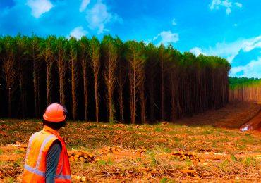 (Português do Brasil) O lado humano do setor florestal