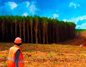 O lado humano do setor florestal